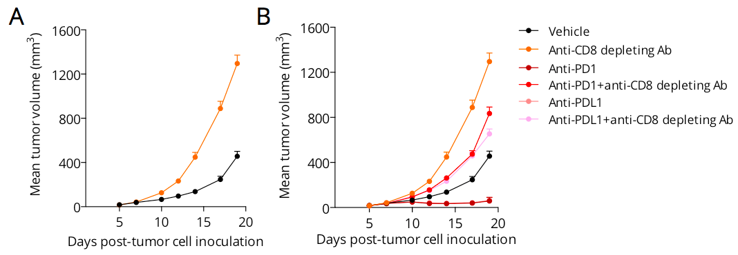 Involvement of CD8 T cells in the tumor growth control and in the response to PD1 and PDL1 antibodies