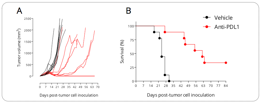 Subcutaneously-implanted MCA205 sarcoma tumor-bearing mouse model is responsive to PDL1 blockade