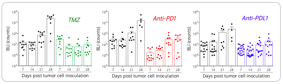 Orthotopic syngeneic GL261 glioblastoma model is responsive to TMZ and PD1/PDL1 axis blockade