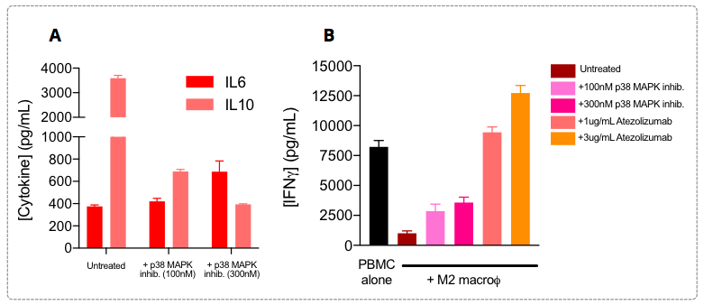 M2 macrophages are known to display a IL6low IL10high profile, a phenotype known to be underpinned by ''overactivated''  signaling pathways in these cells, such as JAK/STAT and SMAD/p38 MAPK, and to be therefore involved in their T cell response suppression function.