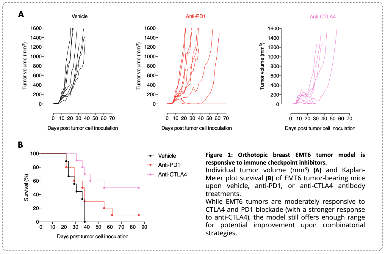 A syngeneic orthotopic EMT6 breast mouse model for preclinical immuno-oncology testing of novel anti-cancer strategies