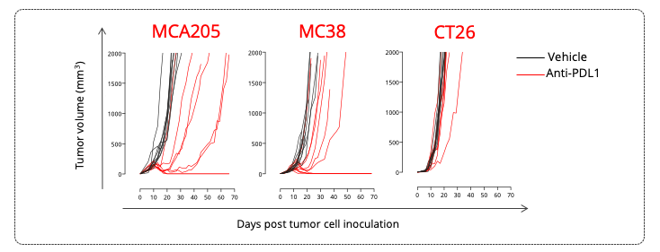 MCA205 sarcoma, MC38 colon and CT26 colon tumor-bearing mouse models exhibit various tumor growth profiles and differential responsiveness to PDL1 blockade.